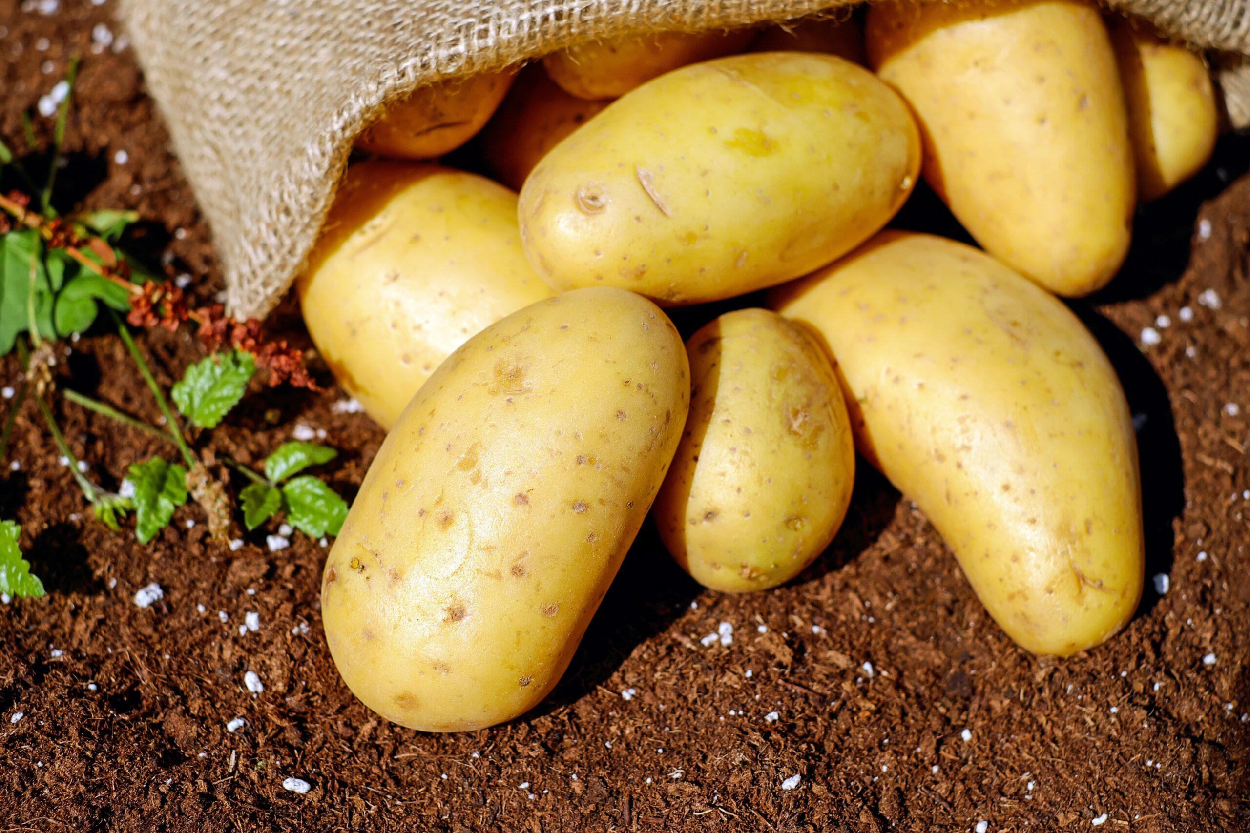 Some potatoes and cereal contain cadmium